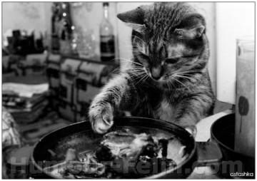 medium_big_4047-cat-kitchen.jpg