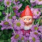medium_carte-postale-nains-de-jardin-dans-fleurs-k6.jpg