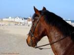 medium_cheval.2.jpg